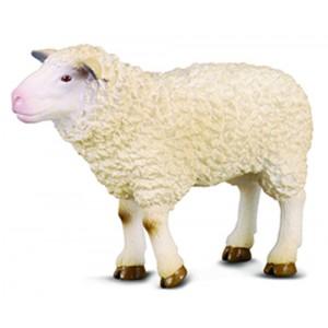 FARMLIFE-SHEEP-M