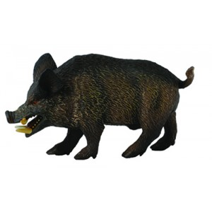 WOODLANDS-WILD BOAR -M