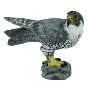 WILDLIFE-PEREGRINE FALCON -S